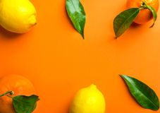 Frame composition from fresh raw citrus fruits oranges lemons tangerines on branch with green leaves. Healthy lifestyle vitamins. Detox balanced diet vegan stock image