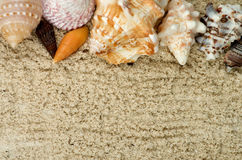 Frame of Conch Sea Shell Stock Photo