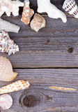 Frame of Conch Sea Shell Royalty Free Stock Photo