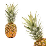 Frame consisting of two pineapples. Stock Photography