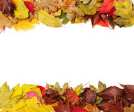 Frame consists of two strips of colorful autumn leaves trees Royalty Free Stock Images