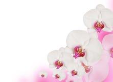 Frame cor-de-rosa Fotos de Stock Royalty Free
