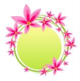 Frame cor-de-rosa da flor ilustração stock