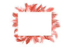 Frame of coral feathers isolated on white background stock image