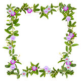 Frame of creeper flower isolated Stock Photos