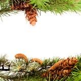 Frame da árvore de Natal imagem de stock royalty free