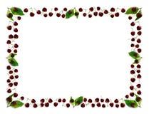 Frame da cereja Foto de Stock