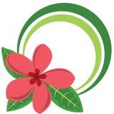 Frame da cor do círculo com a flor tropical grande Imagens de Stock Royalty Free
