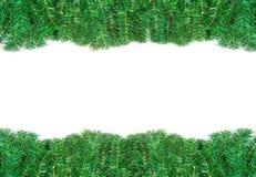 Frame da filial do pinho isolado no branco imagens de stock royalty free