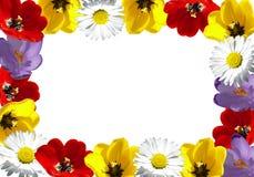 Frame da flor imagem de stock royalty free