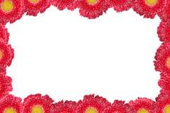 Frame da flor Imagens de Stock Royalty Free
