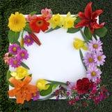 Frame da flor da mola Imagens de Stock