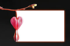 Frame da flor do coração de sangramento Imagens de Stock