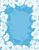Frame da flor do hibiscus Fotos de Stock Royalty Free