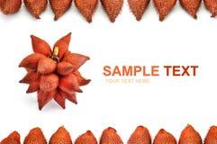 Frame da fruta Fotografia de Stock