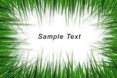 Frame da grama com espaço para o texto Imagens de Stock