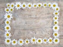 Frame da margarida Fotos de Stock Royalty Free