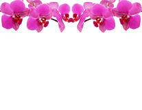 Frame da orquídea Imagens de Stock Royalty Free