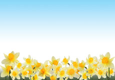 Frame with daffodils Stock Photo