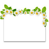 Frame: daisies and green leaves Royalty Free Stock Image