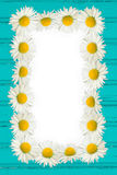 Frame: daisies on the wooden background Stock Photo
