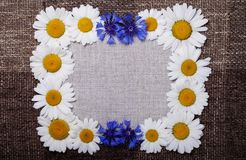Frame daisy background wallpaper design Royalty Free Stock Photography