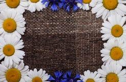 Frame daisy background wallpaper design Stock Image