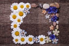 Frame daisy background wallpaper design Stock Images