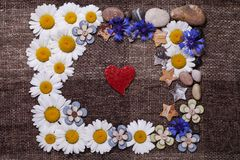 Frame daisy background wallpaper design Royalty Free Stock Image