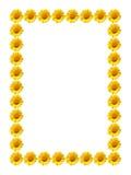 Frame daisy flower Stock Photos