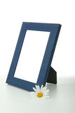 Frame with daisy flower stock images