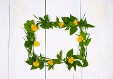 Frame dandelion flowers Stock Photo