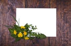 Frame dandelion flowers Royalty Free Stock Photos