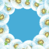 Frame dandelions on blue sky background Royalty Free Stock Photos