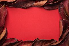 Frame from Dark Red Leaves with Empty Copy Space for Text. Rich Vibrant Crimson Color. Thanksgiving Fall Fashion Valentines royalty free stock images