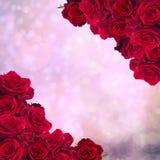 Frame of dark  red roses Stock Image
