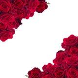 Frame of dark  red roses Stock Photo