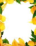 Frame das folhas Fotos de Stock