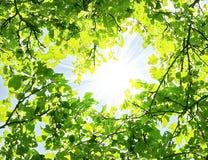 Frame das folhas Fotografia de Stock