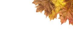 Frame das folhas de outono Fotos de Stock Royalty Free