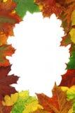 Frame das folhas de outono Foto de Stock Royalty Free