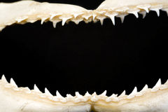 Frame das maxilas Foto de Stock