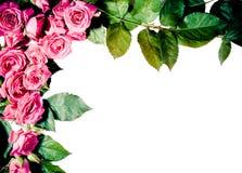 Frame das rosas Fotografia de Stock