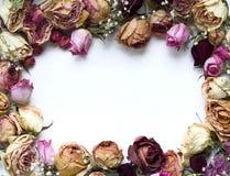 Frame das rosas Imagens de Stock