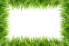 Frame dat uit gras wordt gemaakt Royalty-vrije Stock Foto