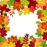 Frame dat uit kleurrijke de herfstbladeren wordt samengesteld Stock Afbeeldingen