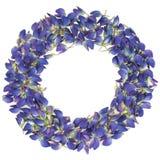 Frame dat van de mooie bloemblaadjes van de lupinebloem wordt gemaakt Stock Foto