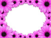 Frame dat van roze bloemen wordt gemaakt Royalty-vrije Stock Afbeeldingen