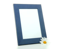 Frame with daysi flower Stock Photography