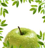 Frame de Apple imagens de stock royalty free